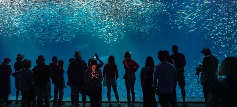 O Aquário mais bonito que irá conhecer. Localizado em Monterey na Califórnia.Imperdível.